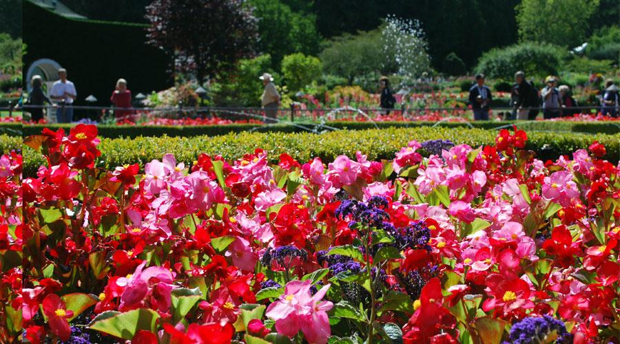 Flowerimage