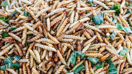 FriedCaterpillars