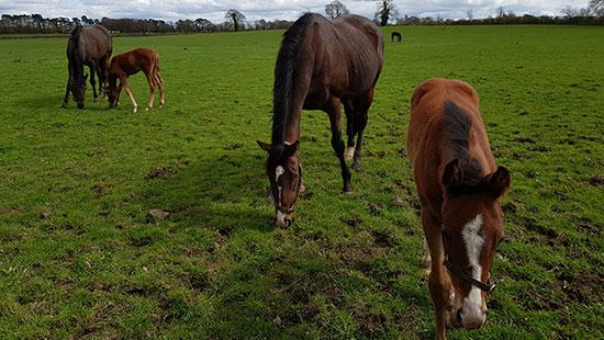 ireland national stud horses