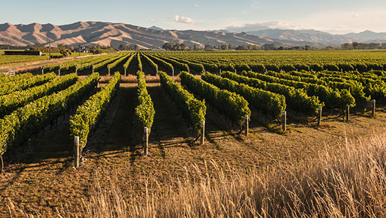 newZealand vineyards