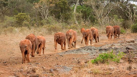 ElephantsKenyaAfrica