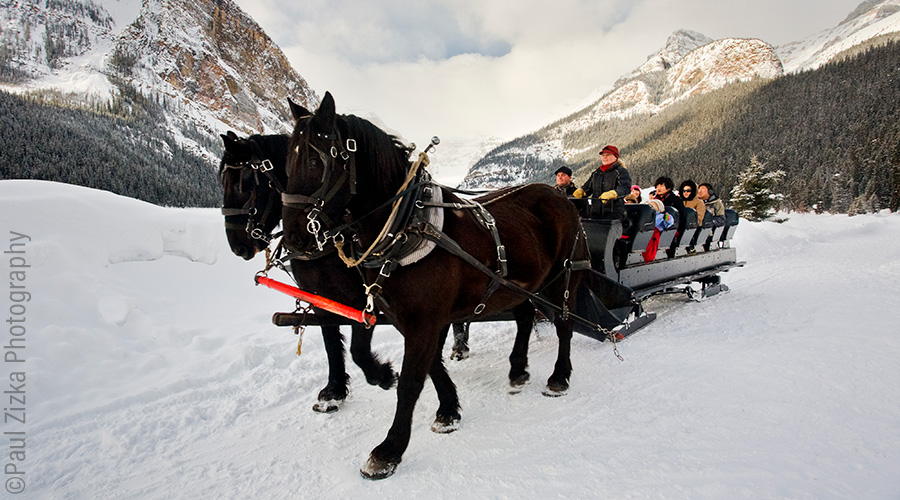HERO Horse Sleigh Ride Lake Louise Paul Zizka 2 Horizontal