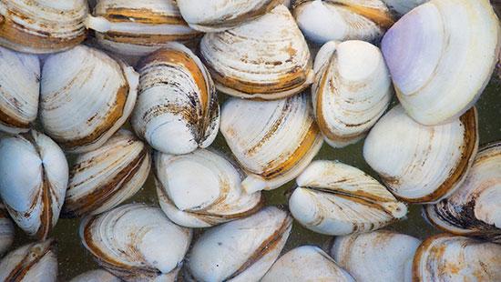 china seafood clams