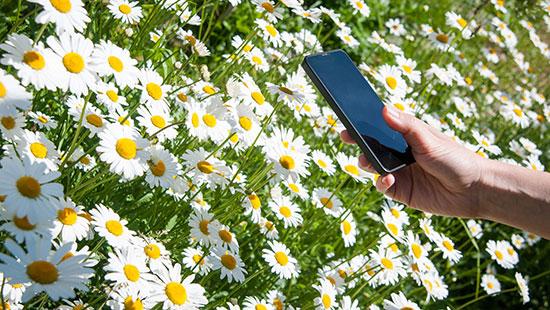 daisies phone