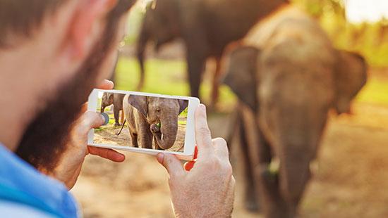 nepal elephant phone