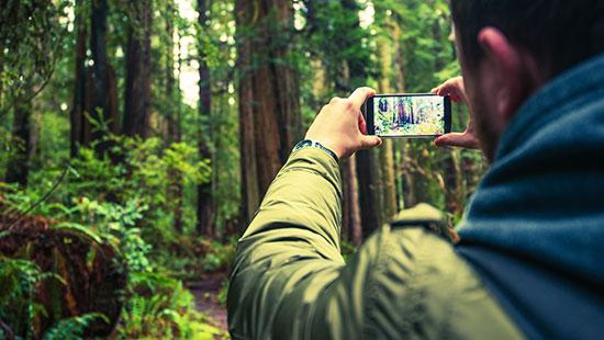 redwood forest california phonecamera