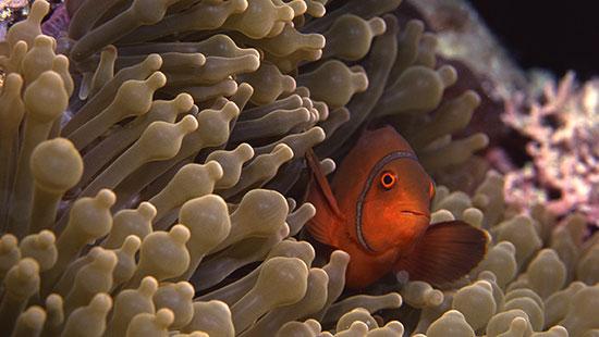 Great Barrier Reef2