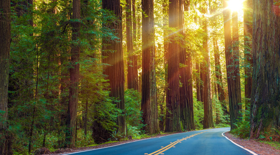 redwood highway california  HeroAdobeStock 100491382 copy