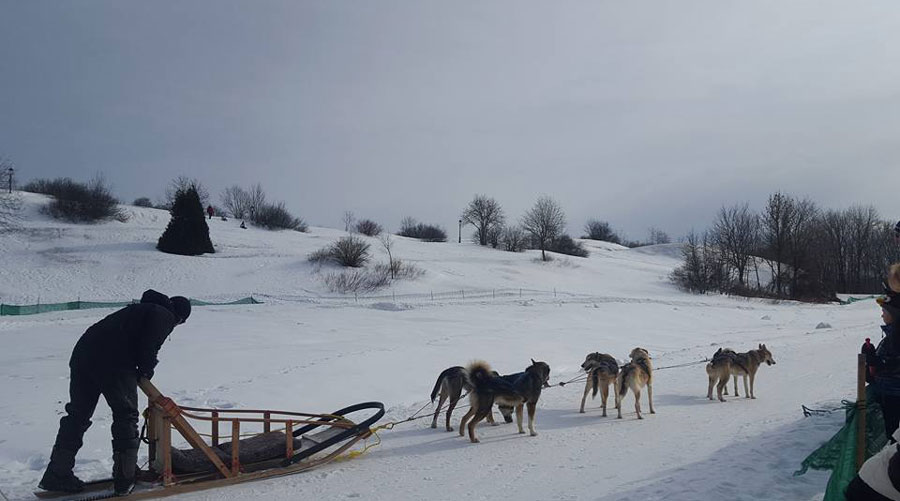 Quebec winter carnival dog sled