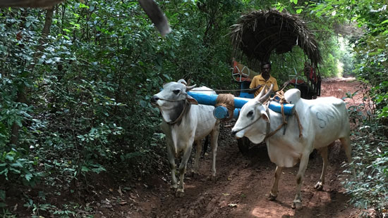 10 Bullock Cart Sri Lanka