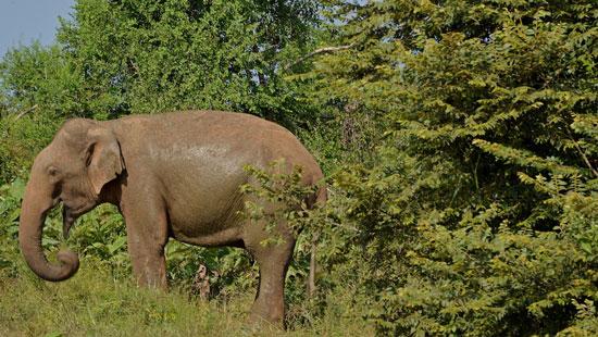 3Elephant Sri Lanka