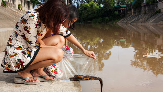 Releasing fish Thailand