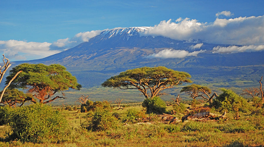 Kilimanjaro CVO 15158 900x500