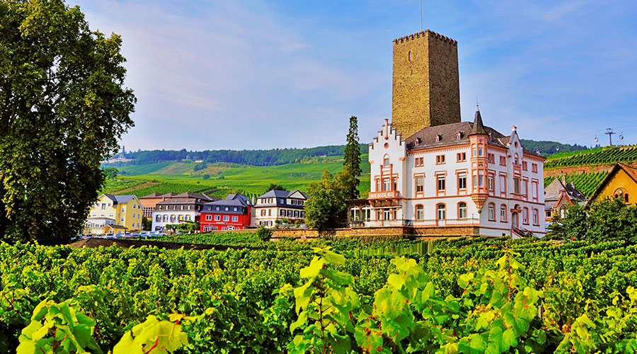 ruedesheim vineyard CVO 61691 900x500