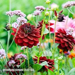 floriade flowers1
