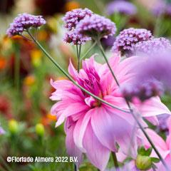 floriade flowers2