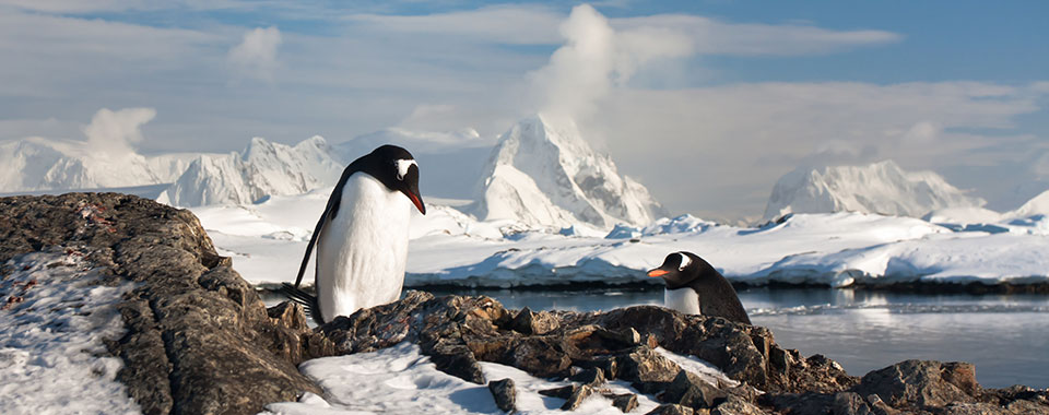Penguin, Antarctica | Collette Vacations