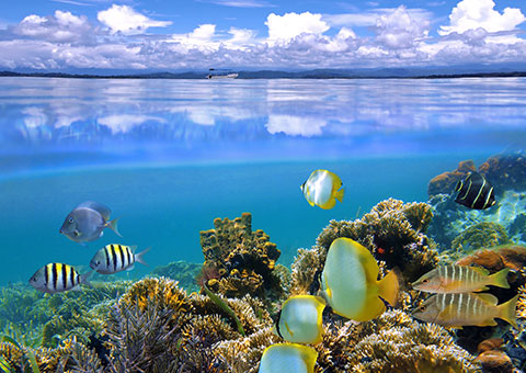 Great Barrier Reef - Australia - Collette
