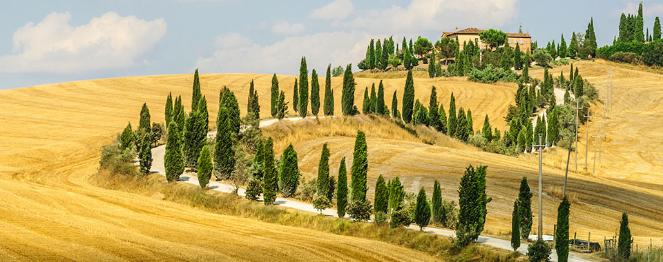 Tuscan Scenic - Collette
