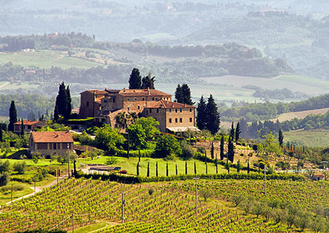 Tuscan Vineyard - Collette
