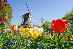 DutchWindmill_14920059_FotoliaRF_2221_284x192