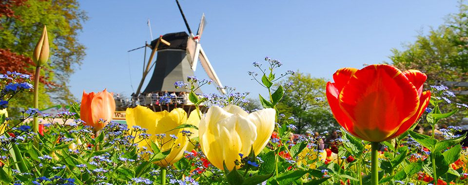 Dutch windmill - Netherlands