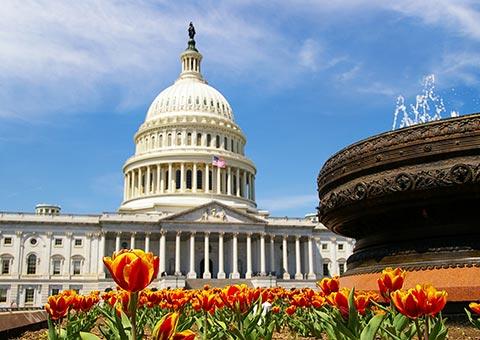 US Capitol Washington - Collette