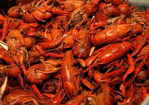 Crawfish_CVO_8682_480x340