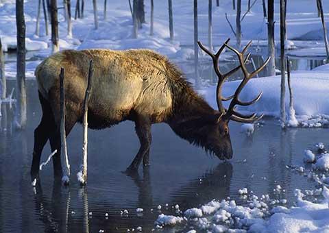 Yellowstone_CorbisRF_1076_480x340
