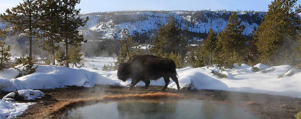 Yellowstone_fotolia_17447_960x380