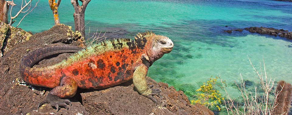 Iguana - Galapagos - Collette
