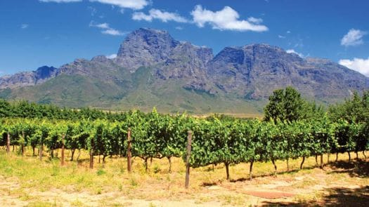 Africa Tours Vineyard