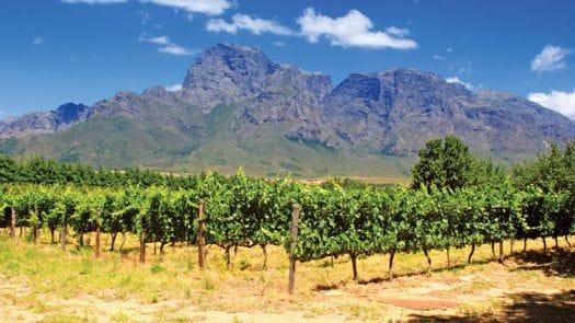 Africa Tours Vineyard