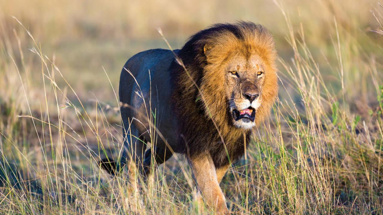 Africa Tours Safari