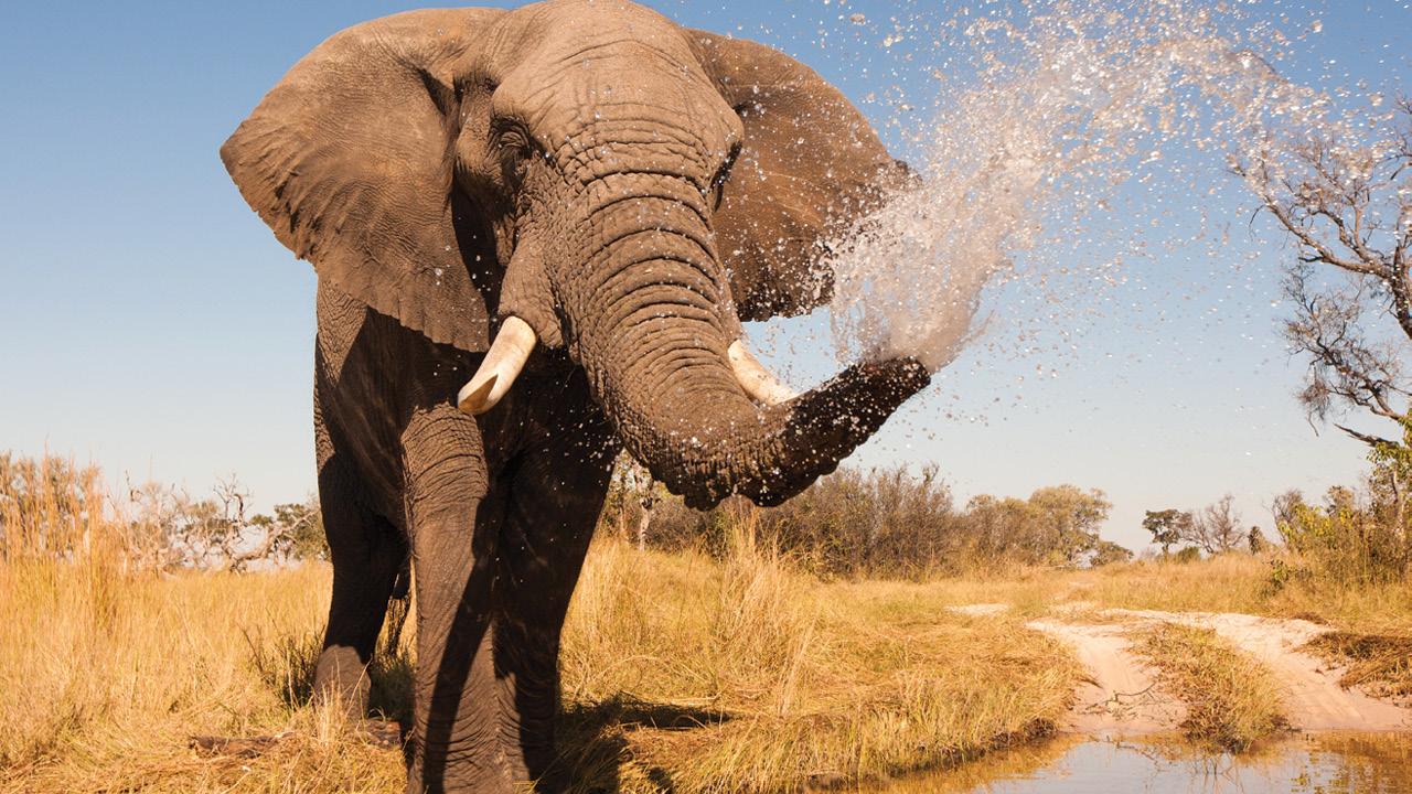 Botswana ms3