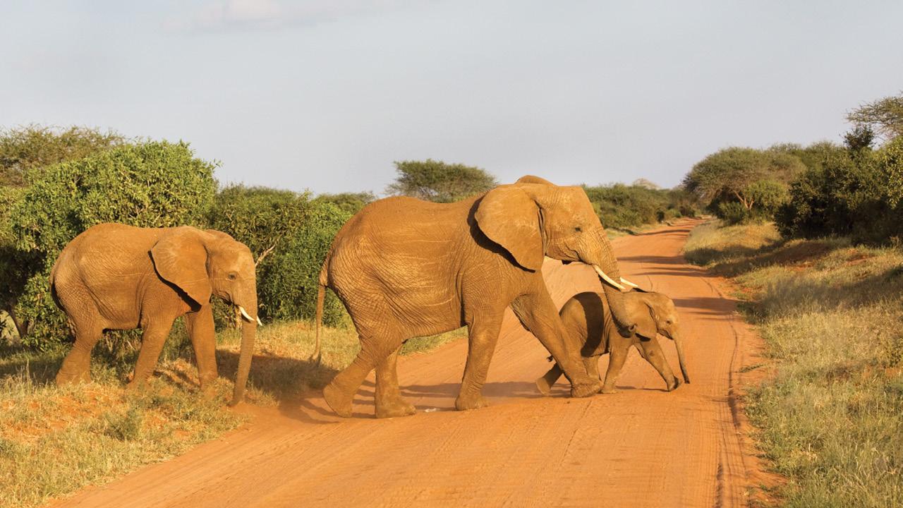 Kenya ms3