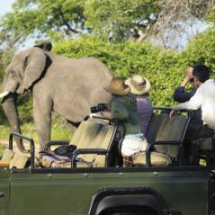 African Safari Elephant 129885354 AdobeStockRF