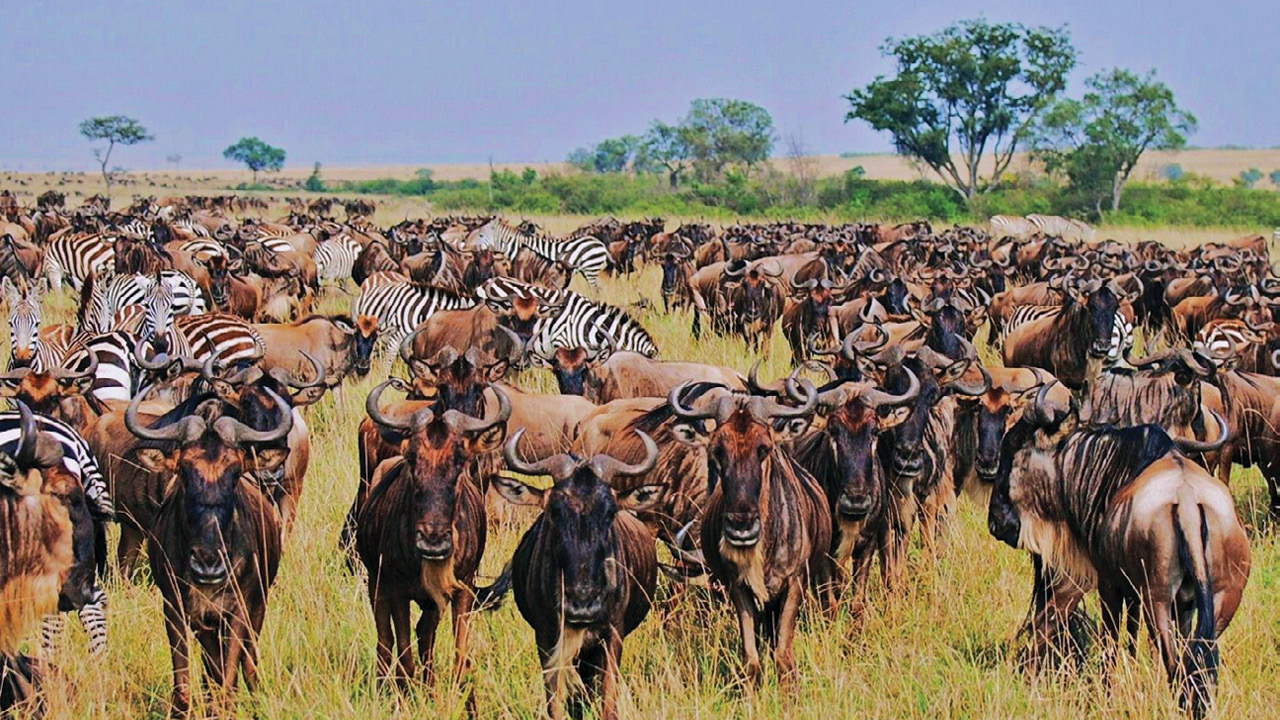 Tanzania ms3