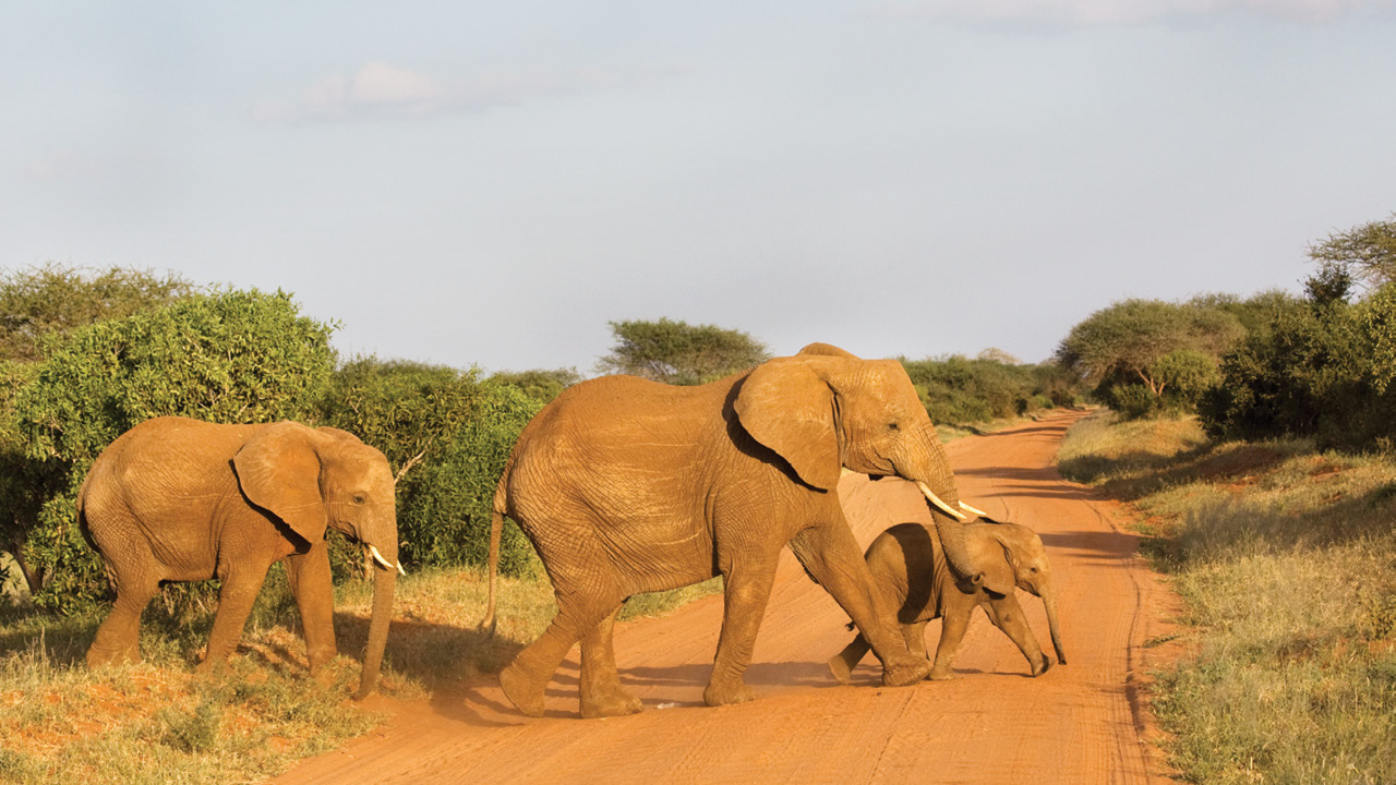 Tanzania ms4