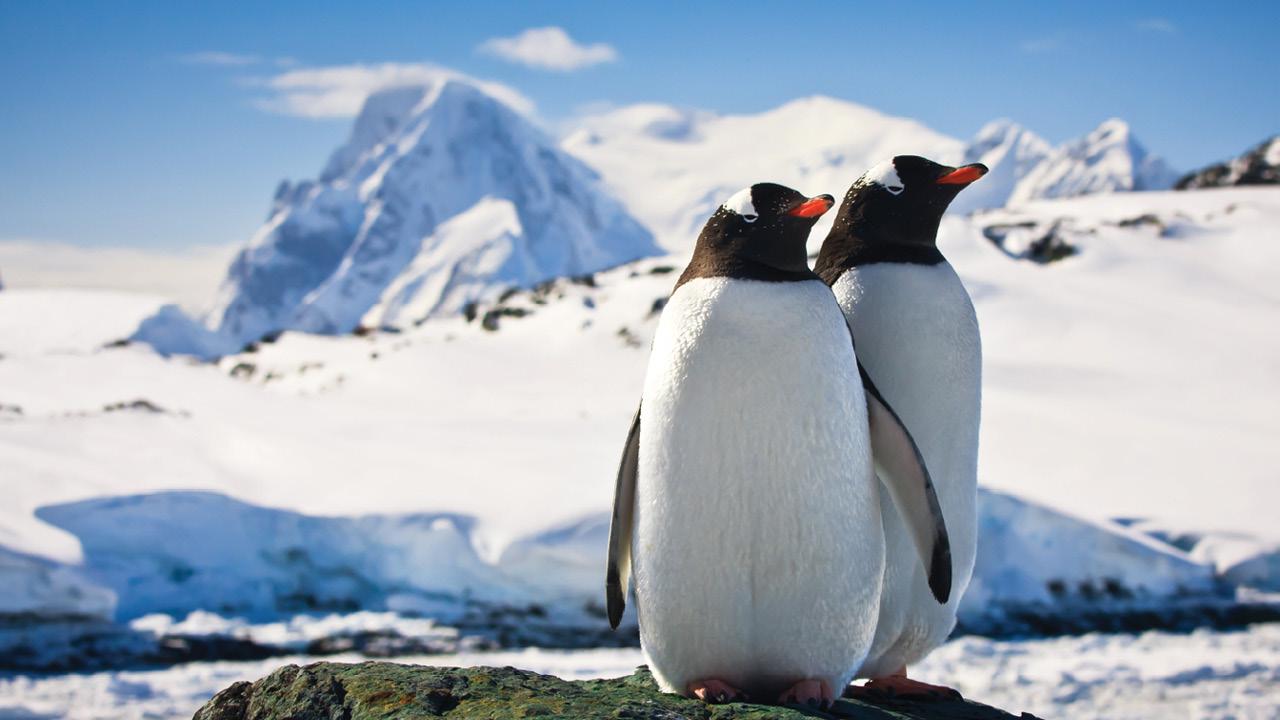 Antarctica ms2