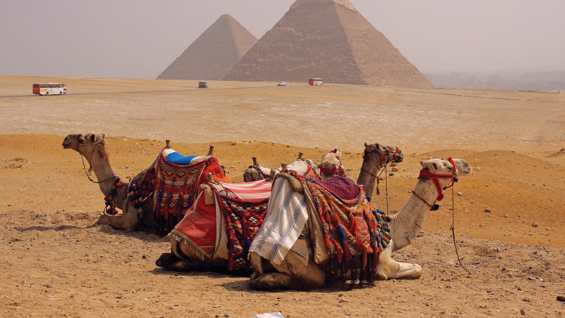 The Curse Of King Tuts Tomb Torrent: Travel To Egypt