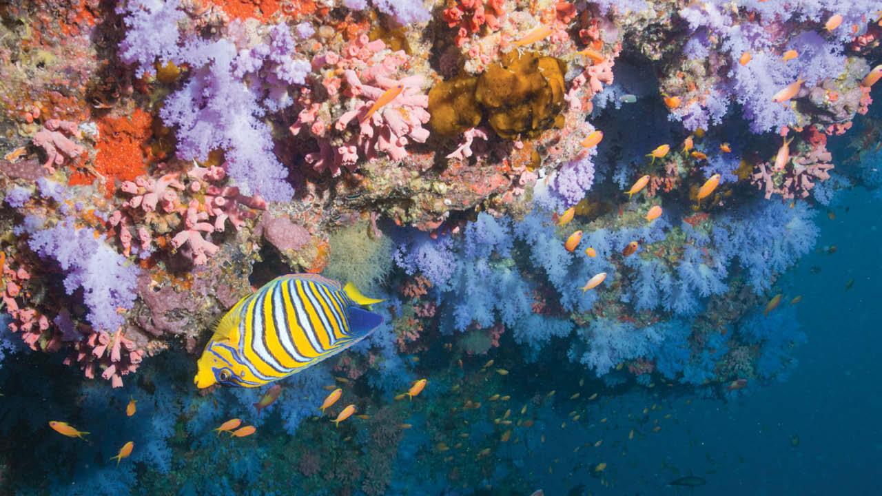 Fiji ms4