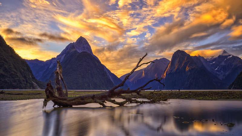 New Zealand md1