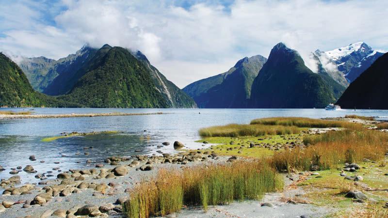 New Zealand md4