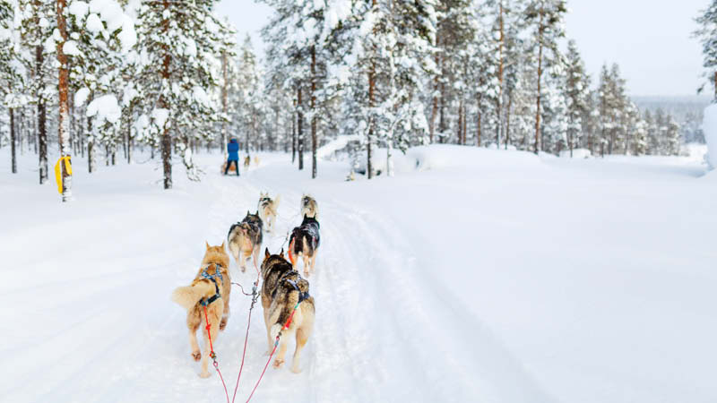 Finland md2