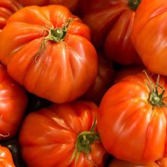 tomatoes AdobeStock 91906671