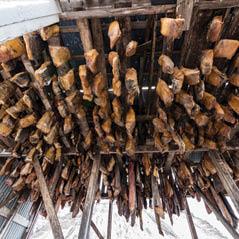hakal fermented shark iceland AdobeStock 124049399