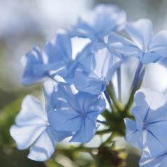 flowers AdobeStock 85845658