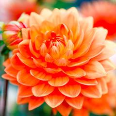 flower AdobeStock 113947535