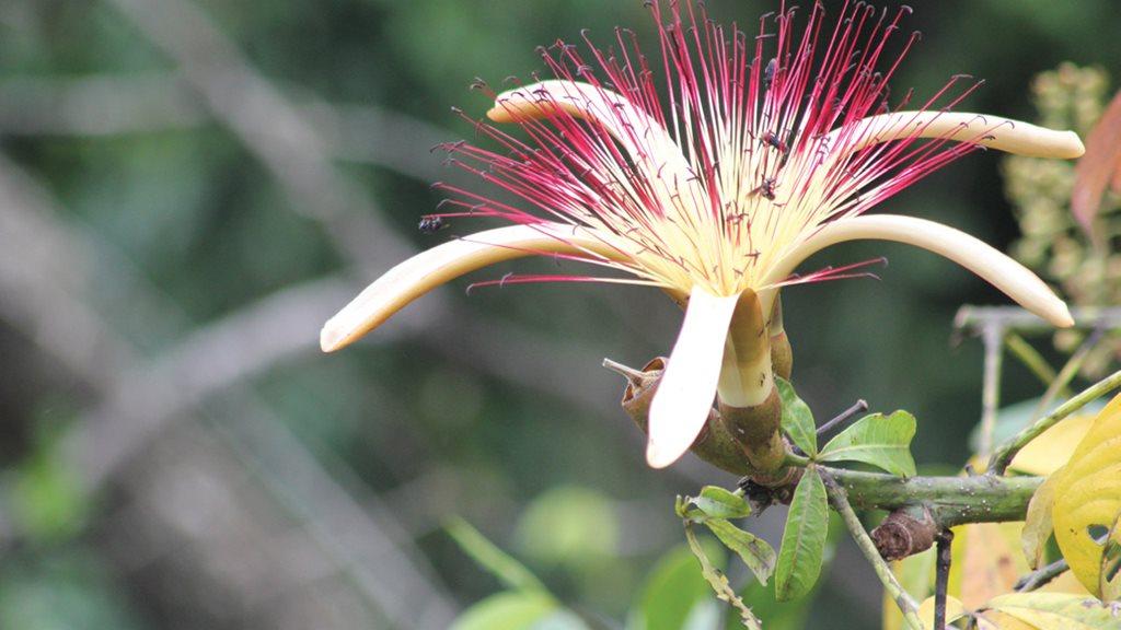 Costa Rica ms4